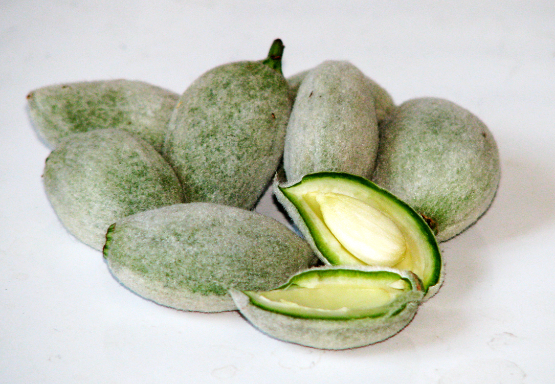 Green Almond Fruit