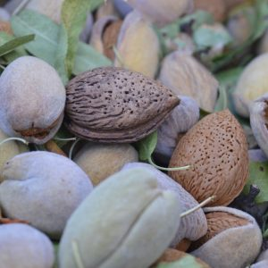Almonds and Almond Hulls
