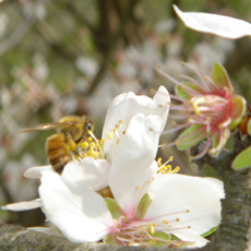 bee_on_flower