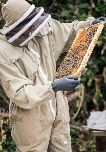beekeeper_holding_frame__full_of_honey