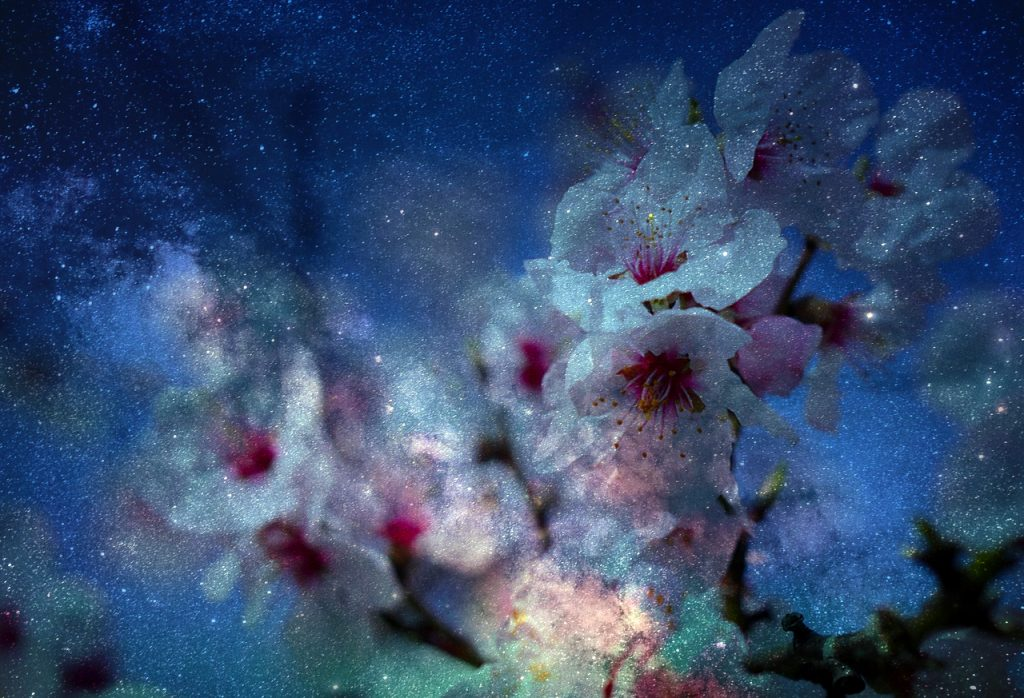 Almond Blossoms in Space