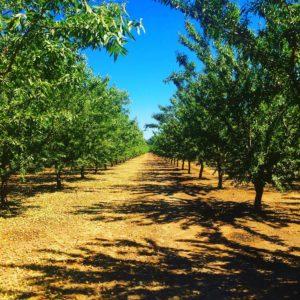 orchard-harvest