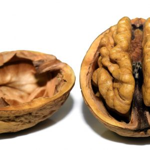 walnut in a shell